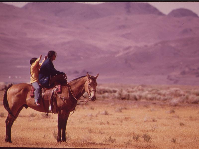 horse, Paiute Tribe