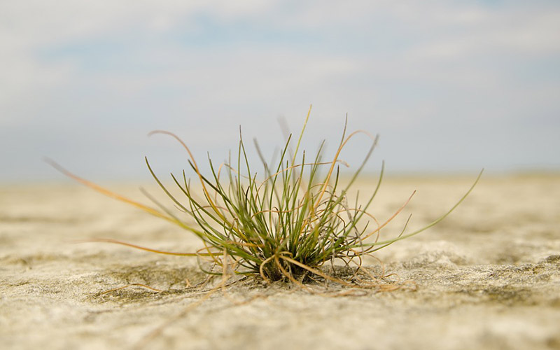 grass, Paiute language