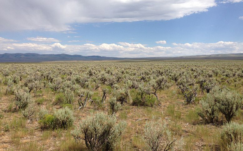 shrubs, Paiute language